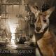 lostkangaroo's picture