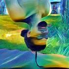 david.czinege's picture