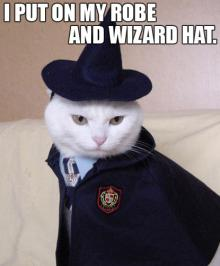 Wizard Cat Will Find It!