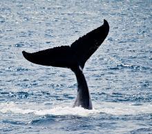 Whale by Ranjith Shenoyr