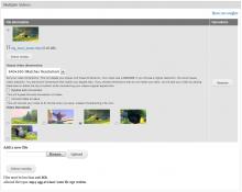 Multiple video upload form with media browser element