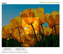 Original image display with crop area selection